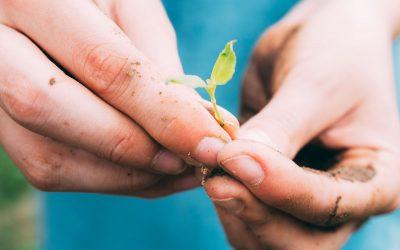 Planta tus propias verduras y cosecha, en un huerto de ocio a un paso de la ciudad